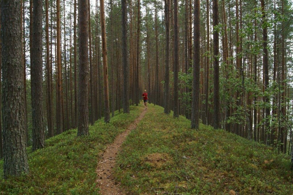 TrailRunningSweden3